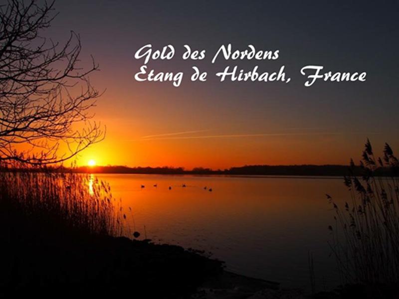 Gold des Nordens – Etang de Hirbach